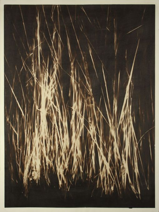 Intermediate-Wheat-Grass-Palladium-22x30-Wyoming-P2000.jpg